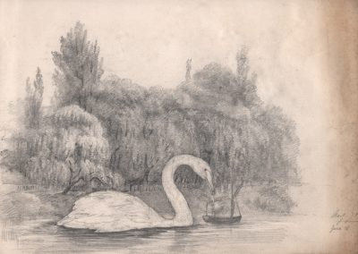"The diet of swans. pencil on found drawing 9 1/4"" 11 3/4"" 2008"