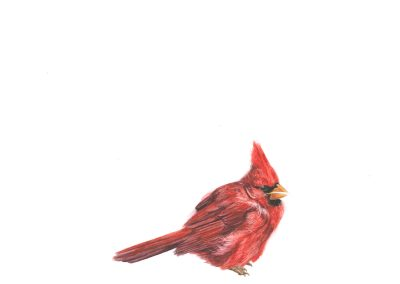 "Learned to survive. (Winter Cardinal, acrylic, 15 3/4"" x 10"", 1978), 2013, watercolour on paper, 10"" x 13"""