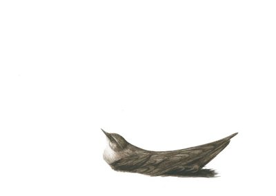 "The species that have flourished. (Chimney Swift in Nest: acrylic, 16"" x 12"", 1978), 2013, watercolour on paper, 12"" x 16"""
