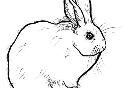 Rabbit002