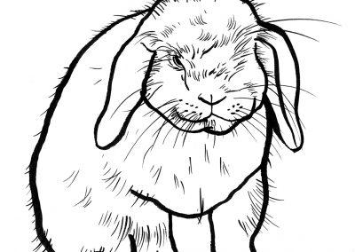 Rabbit004