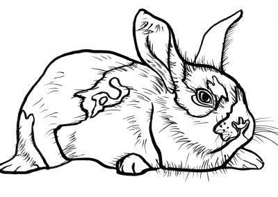 Rabbit005