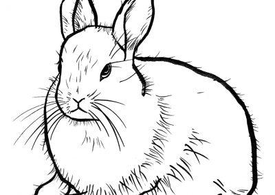 Rabbit006