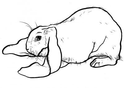 Rabbit007