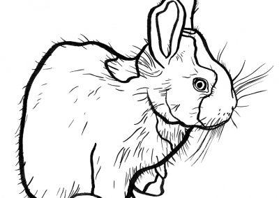 Rabbit008
