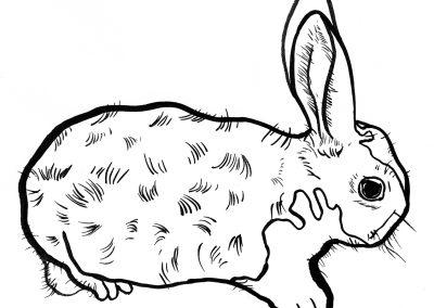 Rabbit009
