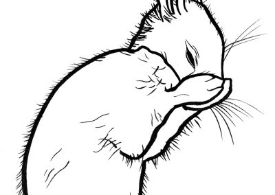 Rabbit010