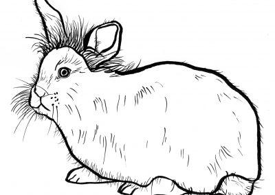 Rabbit011