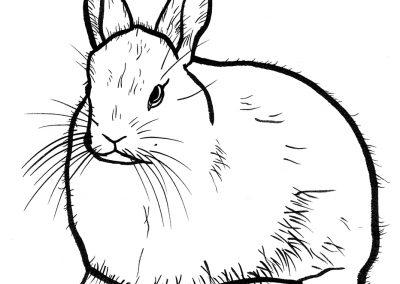 Rabbit012