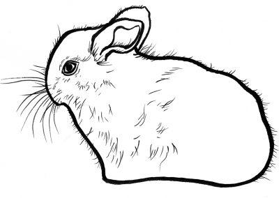 Rabbit013