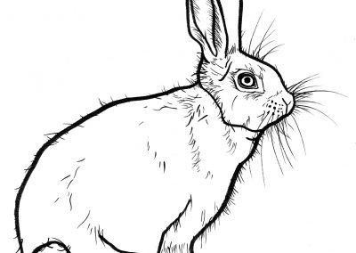 Rabbit014