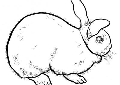 Rabbit015