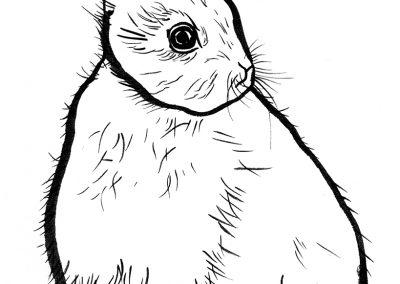 Rabbit016