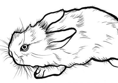 Rabbit018
