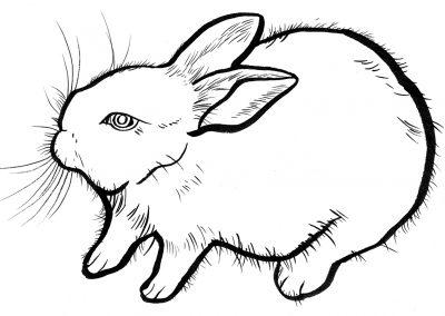 Rabbit020