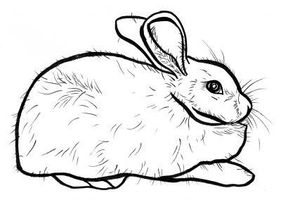 Rabbit022