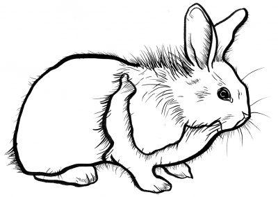 Rabbit023