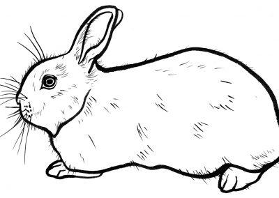 Rabbit024