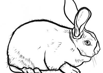 Rabbit025
