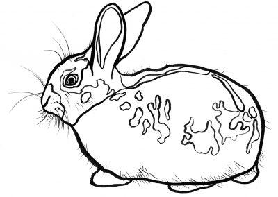 Rabbit026
