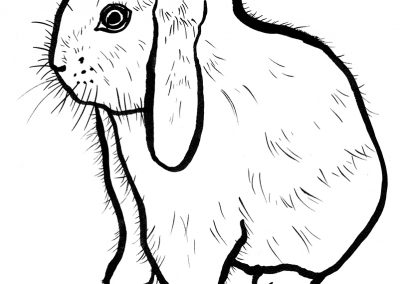 Rabbit027