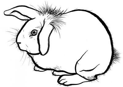 Rabbit028