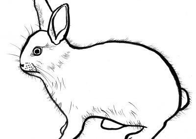 Rabbit030