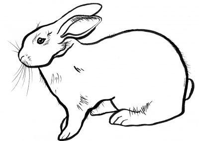 Rabbit031