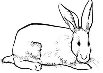 Rabbit032