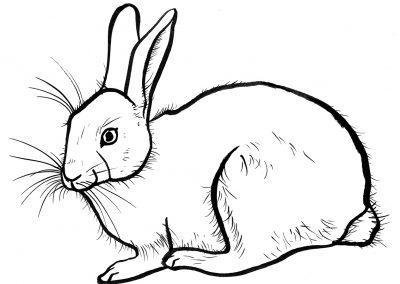 Rabbit033