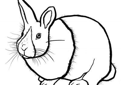 Rabbit034