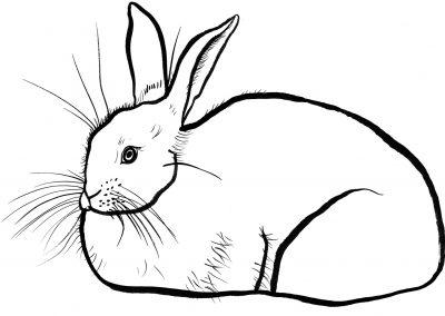 Rabbit035