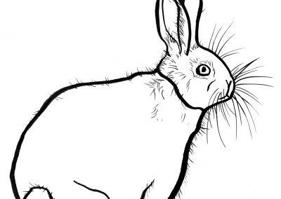 Rabbit036