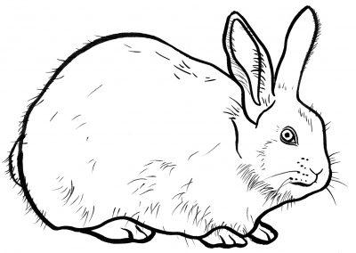 Rabbit037