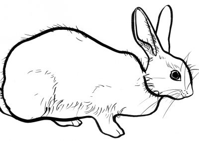 Rabbit038
