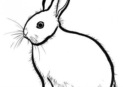 Rabbit039