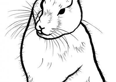 Rabbit040