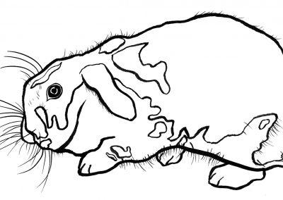 Rabbit041