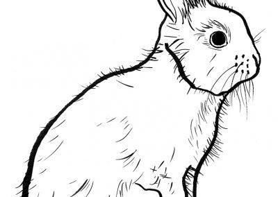 Rabbit042