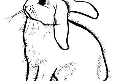 Rabbit043
