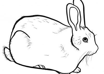 Rabbit044