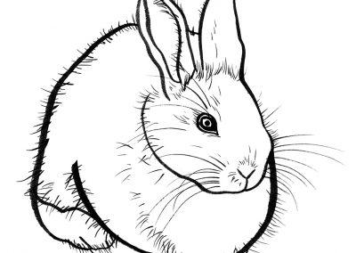 Rabbit045