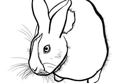 Rabbit046