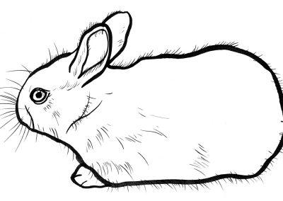 Rabbit047