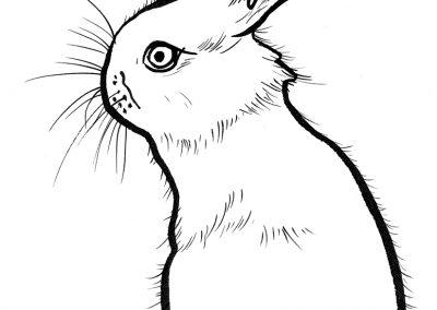 Rabbit048