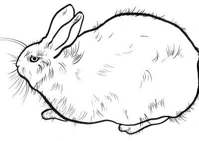 Rabbit049