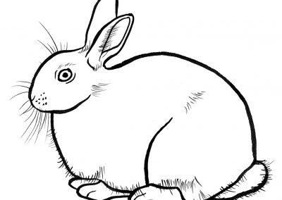 Rabbit050