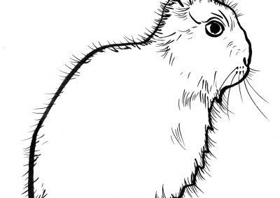 Rabbit052