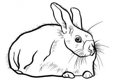 Rabbit053