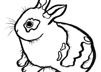 Rabbit054